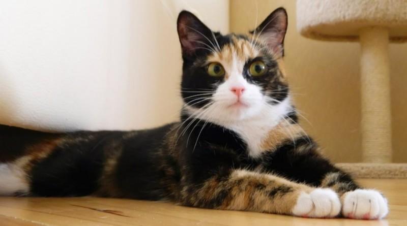 Что следует знать о кошках перед тем как завести питомца