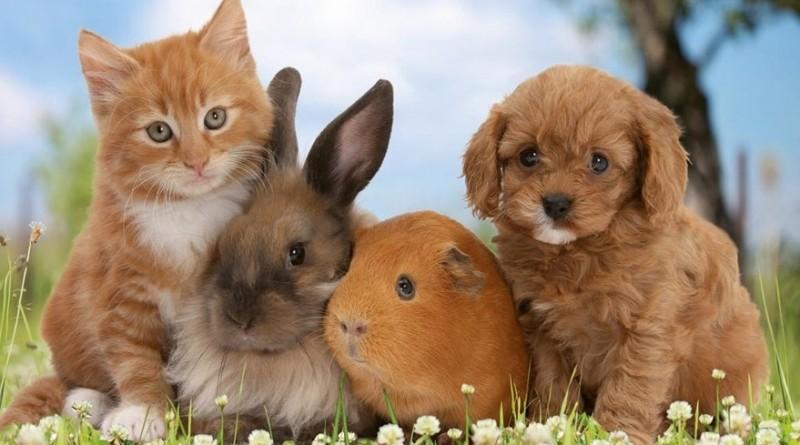 Где купить в Москве товары для домашних животных с доставкой