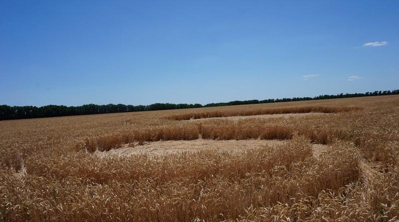 Мистические круги на полях появились в Краснодарском крае