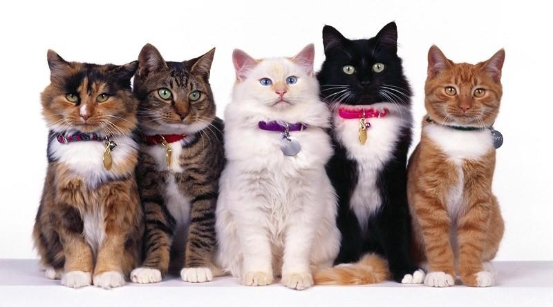 Домашние кошки в городе Санкт-Петербурге - где купить через интернет