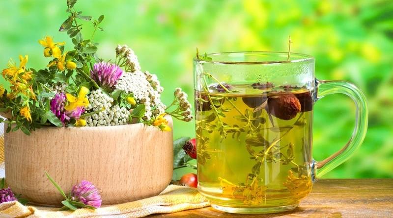 Лекарственные травы - особенности применения алоэ