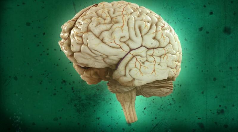 Узнайте насколько Ваш мозг пошлый благодаря короткому тесту