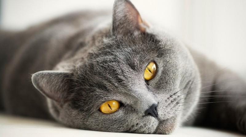Правда ли, что кошки видят призраков и духов
