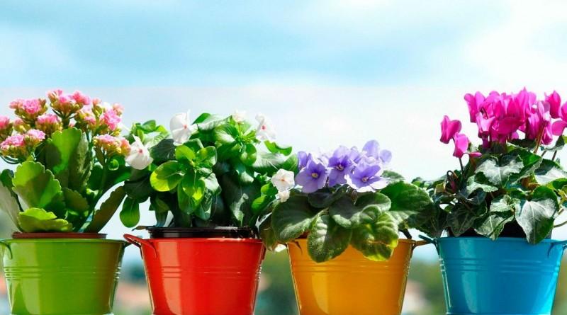 Как подобрать горшок для цветка и где купить в Украине