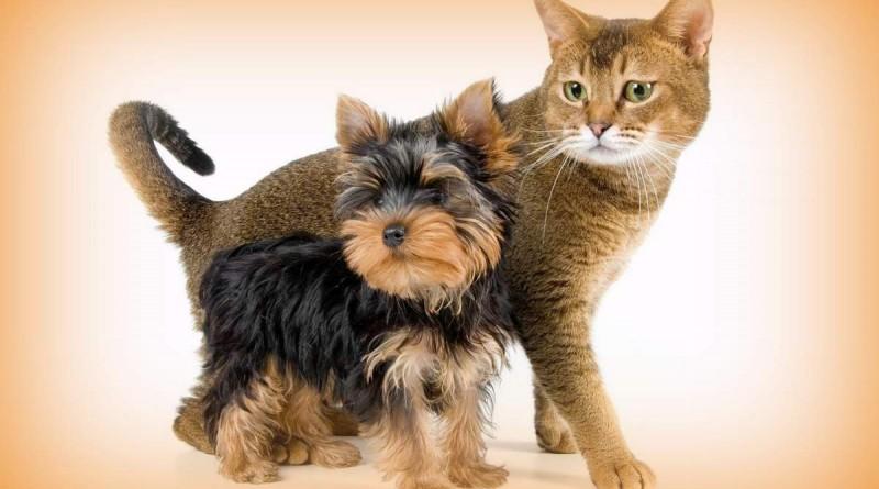 Кошки и собаки страдают из-за торговой войны США и Китая