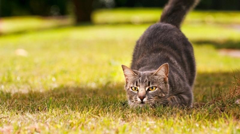 Попробуйте найти кота на фотографии - 80% не справились с заданием
