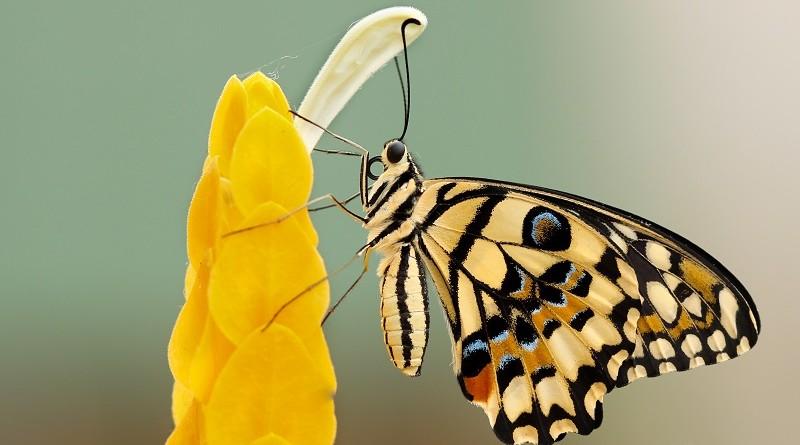 Сможете отыскать бабочку на осенних листьях ?