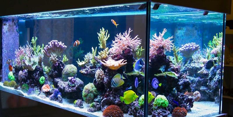 Где купить большой аквариум для рыбок в Украине и как его подготовить