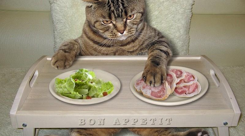 #НакормиКота - поправляем КАРМУ с помощью котов