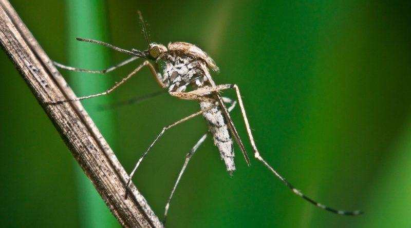 Как Алиэкспресс предлагает бороться с комарами - обзор предложений