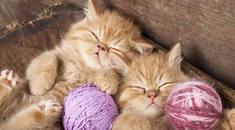 Попробуйте найти 15 котиков спрятанных на картинке