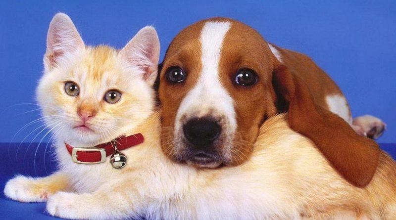 Головоломка про кошек и собак с которой справляются школьники младших классов