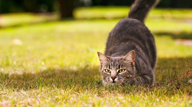 Корм для котов холистик GRANDORF CAT LIVING PROBIOTICS 4 MEAT & RICE STERILISED