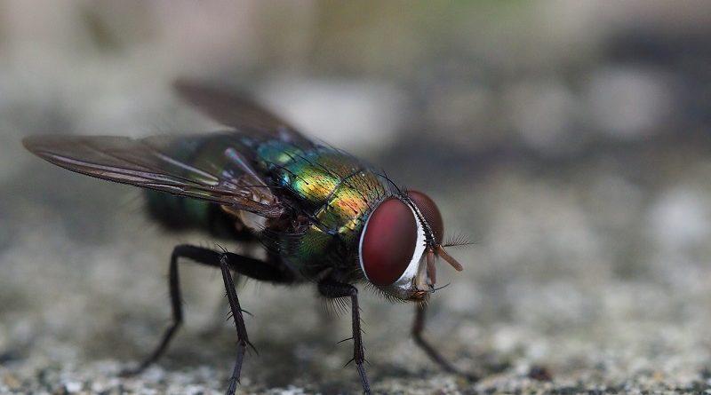 Электрическая ловушка для мух обнаружена на Алиэкспресс